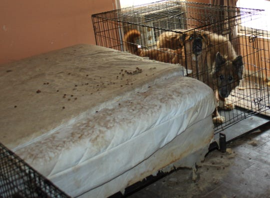 Animal control seized 54 animals from a home in Cordes Lakes after they were found to be neglected on May 7, 2019.