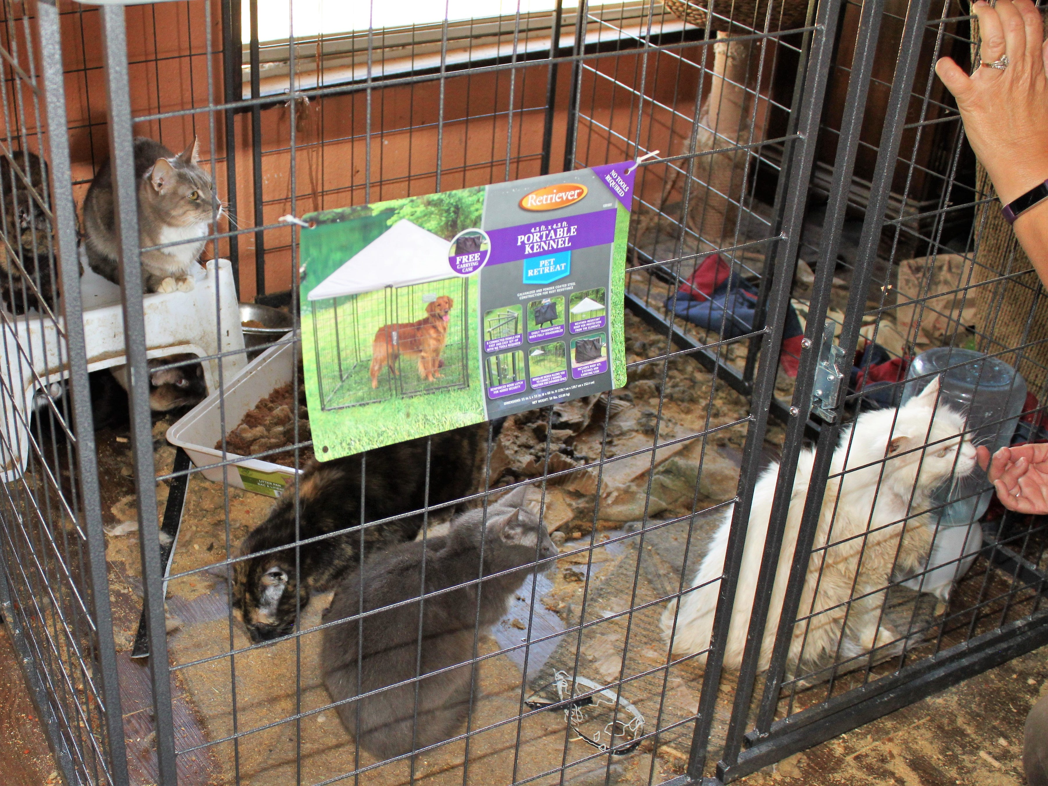 Animal control officers seized 54 neglected animals, including 28 cats, from a home in Cordes Lakes on May 7, 2019.