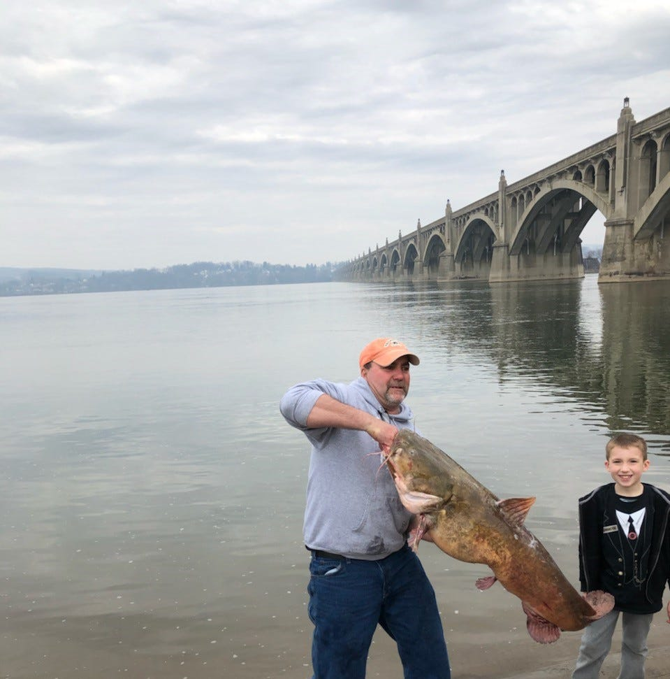 50-pound catfish pulled from the Susquehanna River in York County, sets new state record