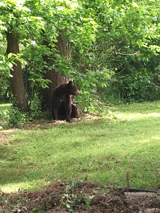 Authorities said the bear was not aggressive. It was relocated to U.S. Forest Service land.