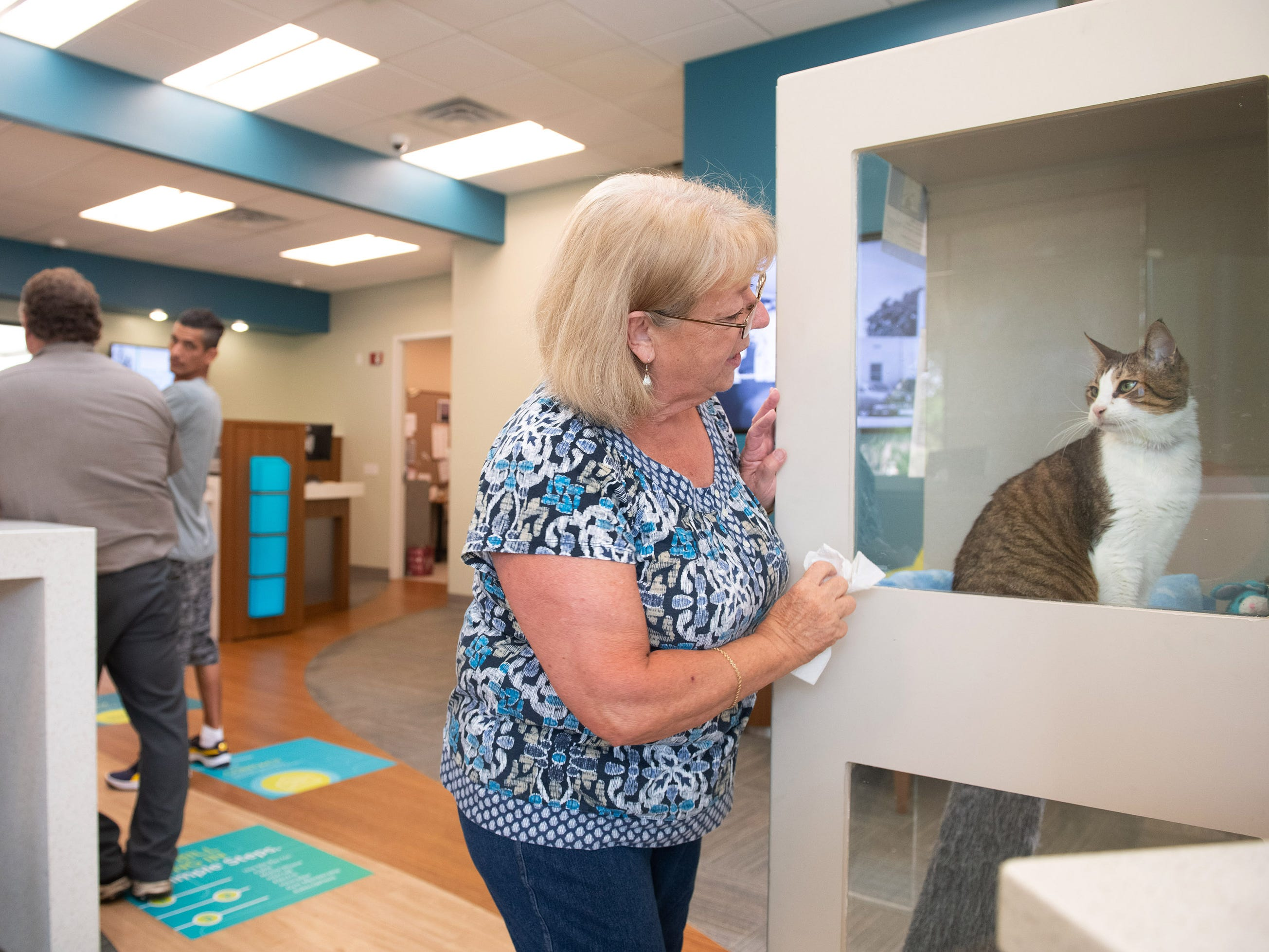 Barbara Herring, a volunteer with the Humane Society of Vero Beach and Indian River County, cleans the kitty condo windows that houses Spork, a four-year-old male cat that is up for adoption, at the Seacoast Bank at 6030 20th Street, on Wednesday, May 8, 2019, in Vero Beach. The shelter has partnered with Seacoast Bank to host a new adoptable cat every week at the Seacoast Bank. Seacoast Bank received their first cat up for adoption from shelter in October and since then they have had 18 cats adopted from their location.