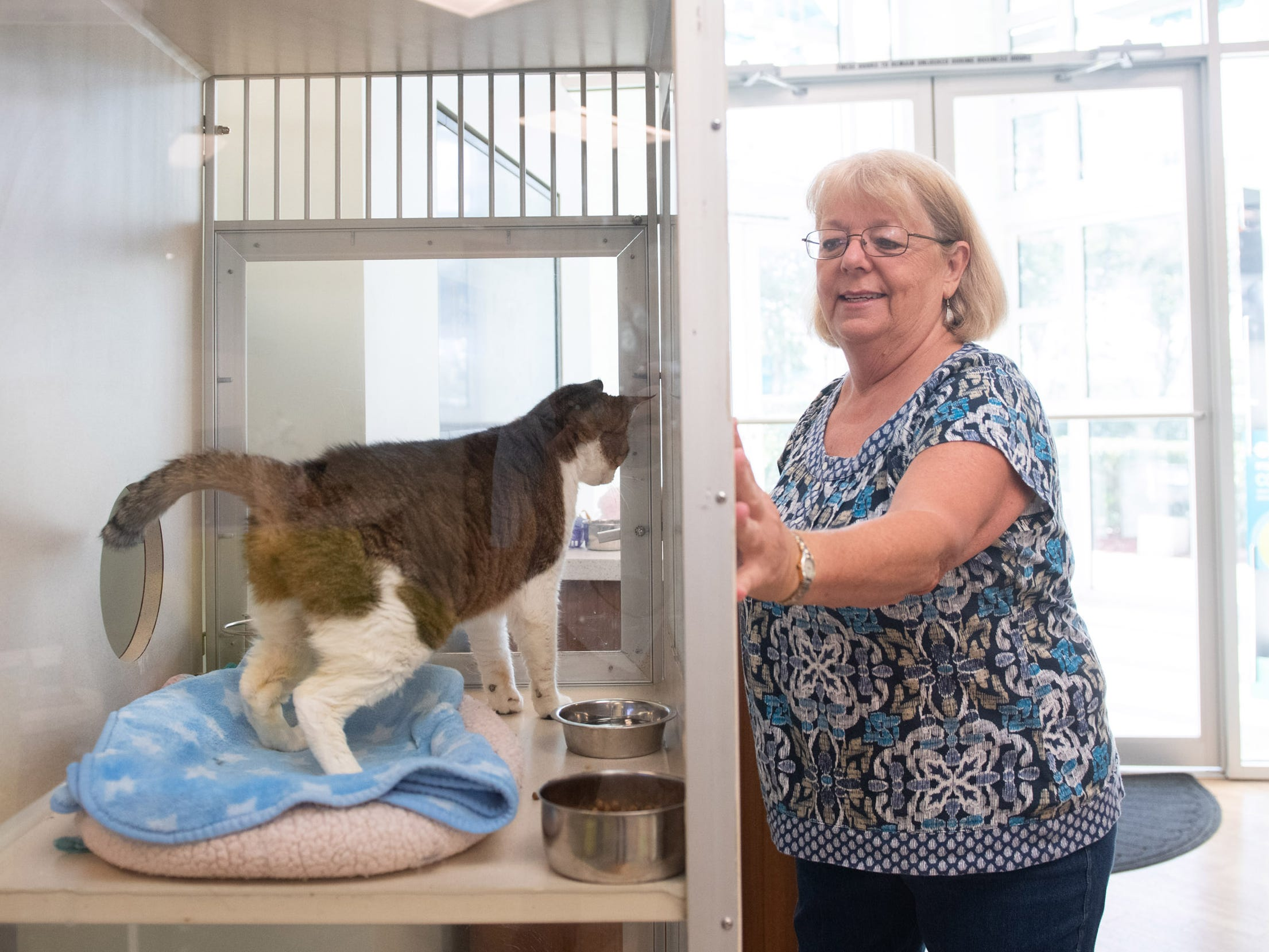 The Humane Society of Vero Beach and Indian River County has partnered with Seacoast Bank to host a new adoptable cat every week at the Seacoast Bank at 6030 20th Street in Vero Beach. Seacoast Bank received their first cat up for adoption from the shelter in October and since then they have had 18 cats adopted from their location.