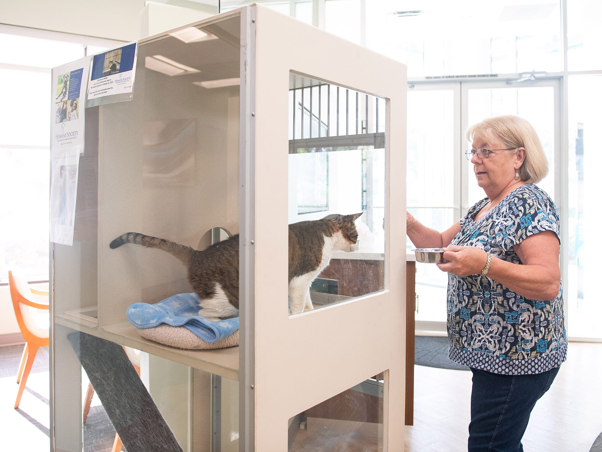 Barbara Herring, a volunteer with the Humane Society of Vero Beach and Indian River County, feeds Spork, a four-year-old male cat that is up for adoption at the Seacoast Bank at 6030 20th Street, on Wednesday, May 8, 2019 in Vero Beach. The animal shelter has partnered with Seacoast Bank to host a new adoptable cat every week at the Seacoast Bank. Seacoast Bank received their first cat up for adoption from the Humane Society of Vero Beach and Indian River County in October and since then they have had 18 cats adopted from their location.