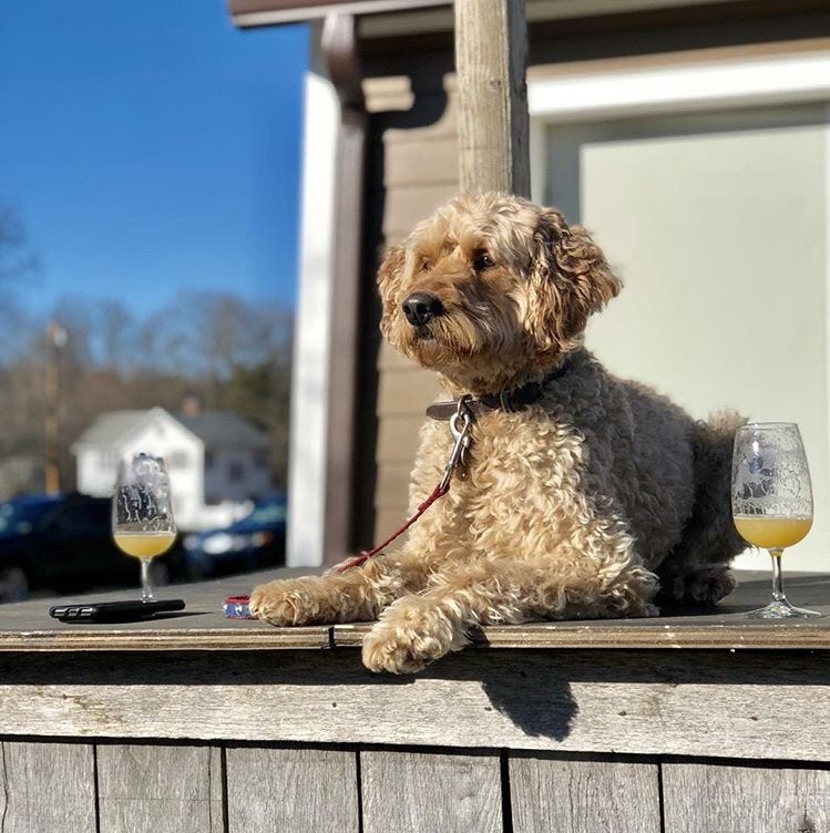 Craft brews and canines: 7 breweries where you can bring your dog this summer