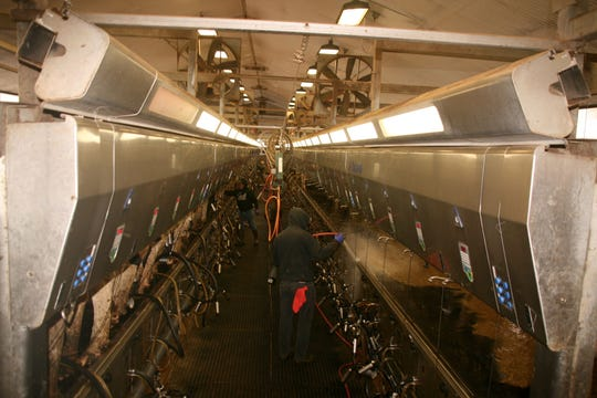 The Double-45 Delaval parallel parlor at Quantum Dairy is in operation 24 hours every day.