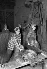 Lula Lawrence, left, and Esther Gunderson comb hemp fibers at a hemp mill on U.S. 51 in DeForest, Wis., on Oct. 6, 1944. In the background, two women sort hemp fiber bundles for rope and cordage. Wisconsin was the leading producer of hemp during World War II. The state recently legalized hemp production.