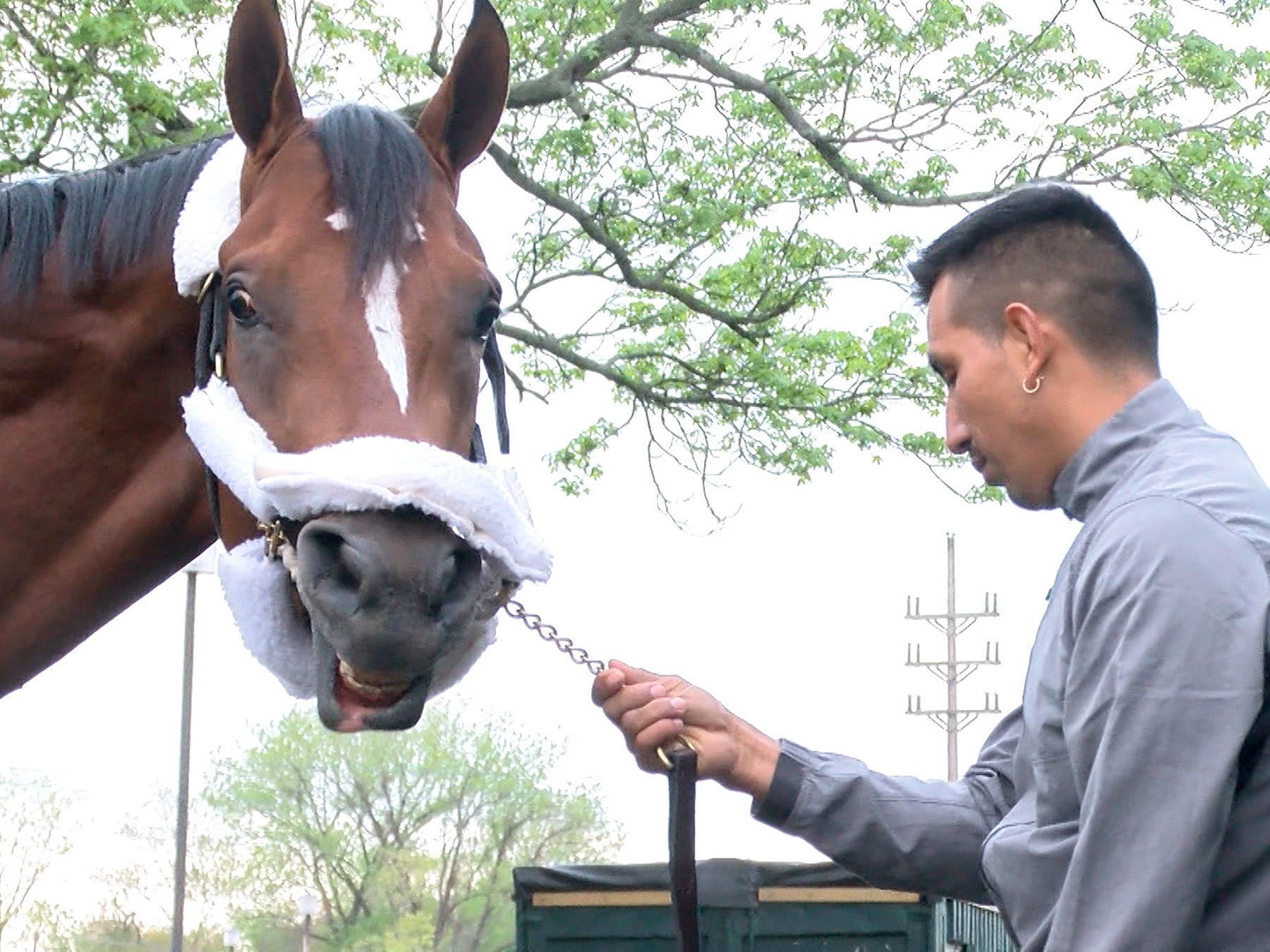 Edelberto Rivas is shown with Maximum Security, disaqualified after winning the Kentucky Derby on Saturday, after arriving at Monmouth Park early Tuesday, May 7, 2019.