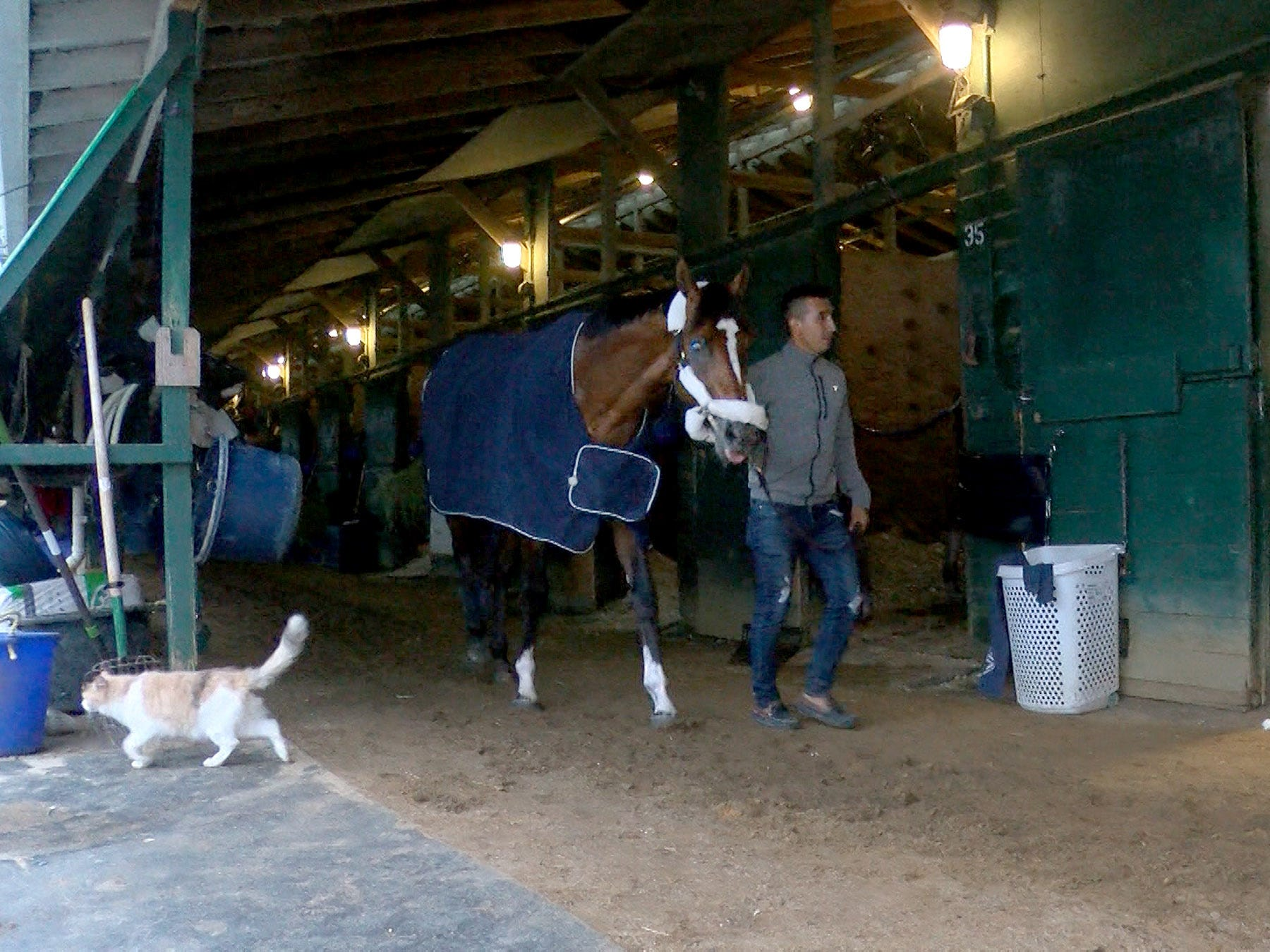 Edelberto Rivas leads Maximum Security, disaqualified after winning the Kentucky Derby on Saturday, around Jason Servis' barn after arriving at Monmouth Park early Tuesday, May 7, 2019.