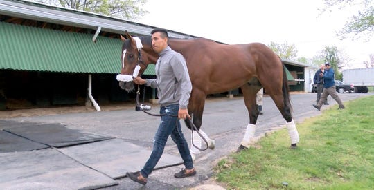 Edelberto Rivas leads Maximum Security, disqualified after winning the Kentucky Derby on Saturday, through the barn area after arriving at Monmouth Park early Tuesday,
