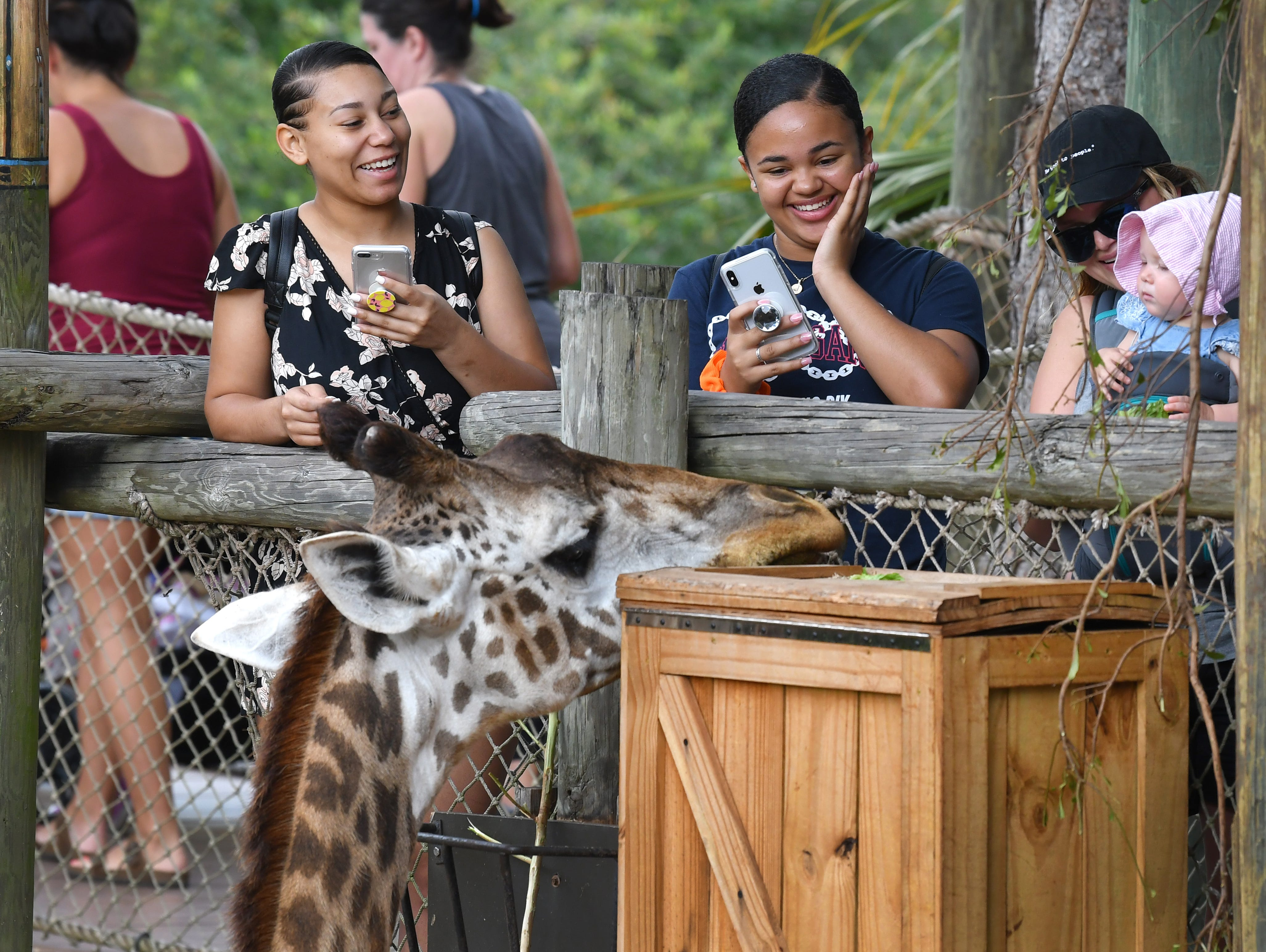 The Brevard Zoo in Viera is a popular visit for locals and tourists alike.