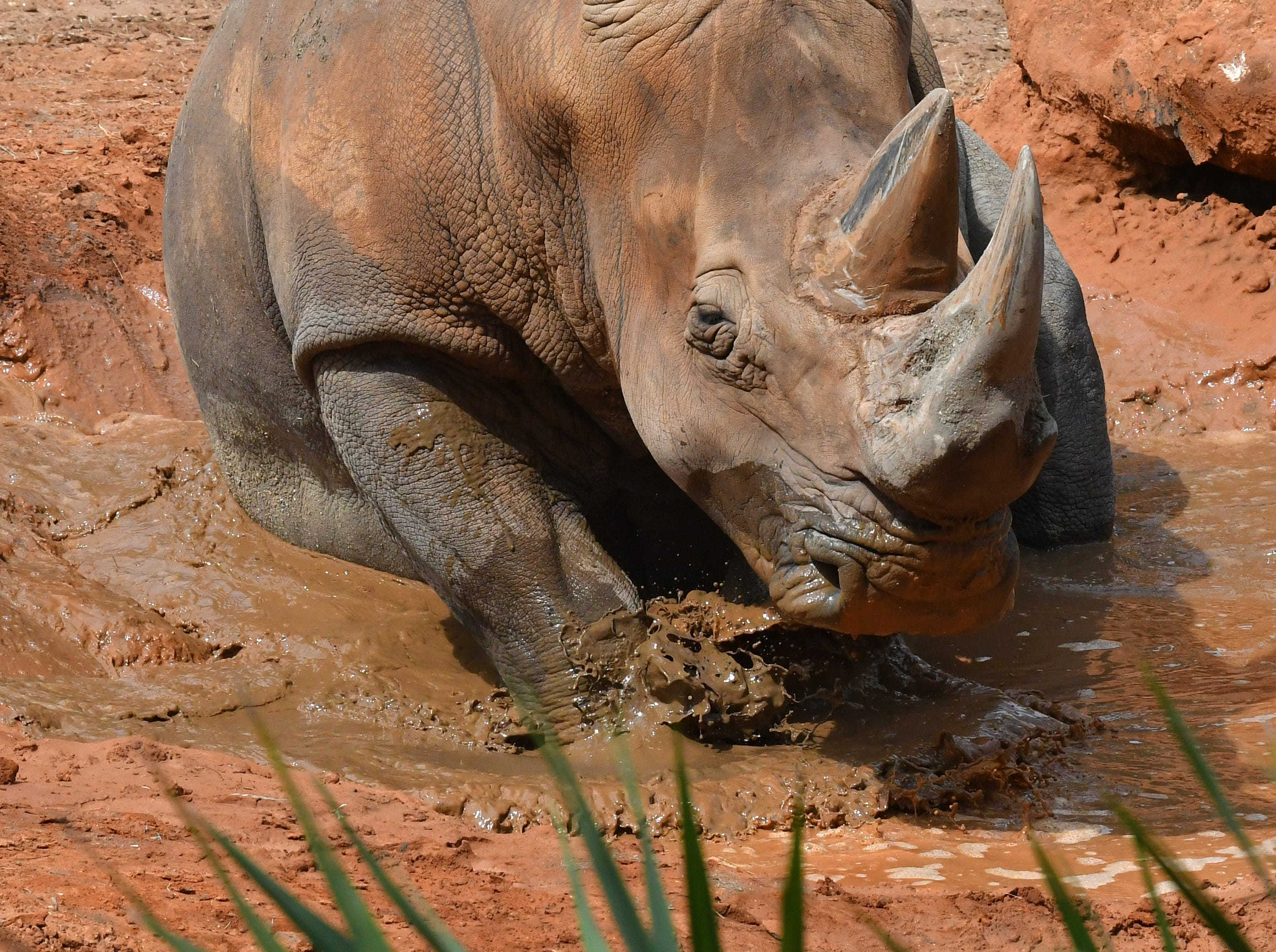 Rhino Encounter mud bath.  Viera is a popular visit for locals and tourists alike.
