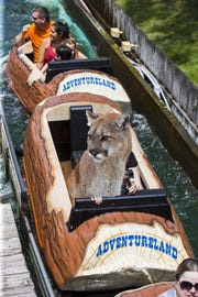 The Des Moines mountain lion sadly missed its chance to ride the log ride at Adventureland in Altoona, which was torn down in 2015 to make way for a new roller coaster.