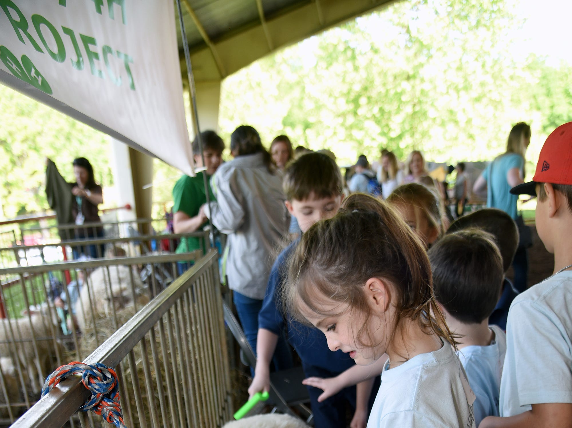A Sequoyah Elementary student combs a Katahdin hair sheep. Over 600 Knox County School children attended the annual Knox County Farm Bureau Ag in the Classroom Farm Day at Chilhowee Park Tuesday, May 7, 2019.