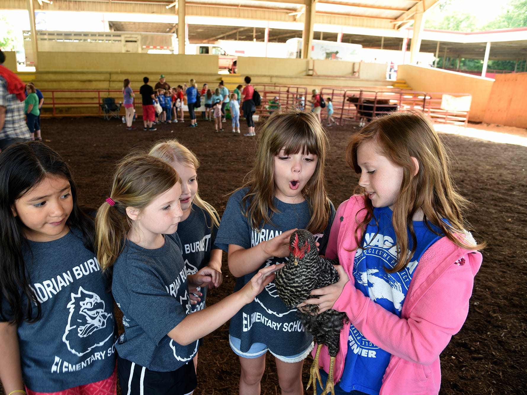 Allison Keeler, right,  holds a Barred Rock chicken for Adrian Burnett students to pet. Over 600 Knox County School children attended the annual Knox County Farm Bureau Ag in the Classroom Farm Day at Chilhowee Park Tuesday May 7, 2019.