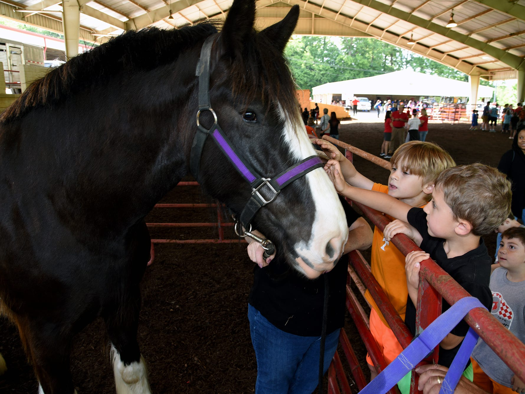 Bonny Kate Elementary School students Caleb Egeland, left, and Jack McCarthy pet Vino, a 5-year-old black Clydesdale owned by Cindy Conner of Karns. Over 600 Knox County School children attended the annual Knox County Farm Bureau Ag in the Classroom Farm Day at Chilhowee Park Tuesday, May 7, 2019.