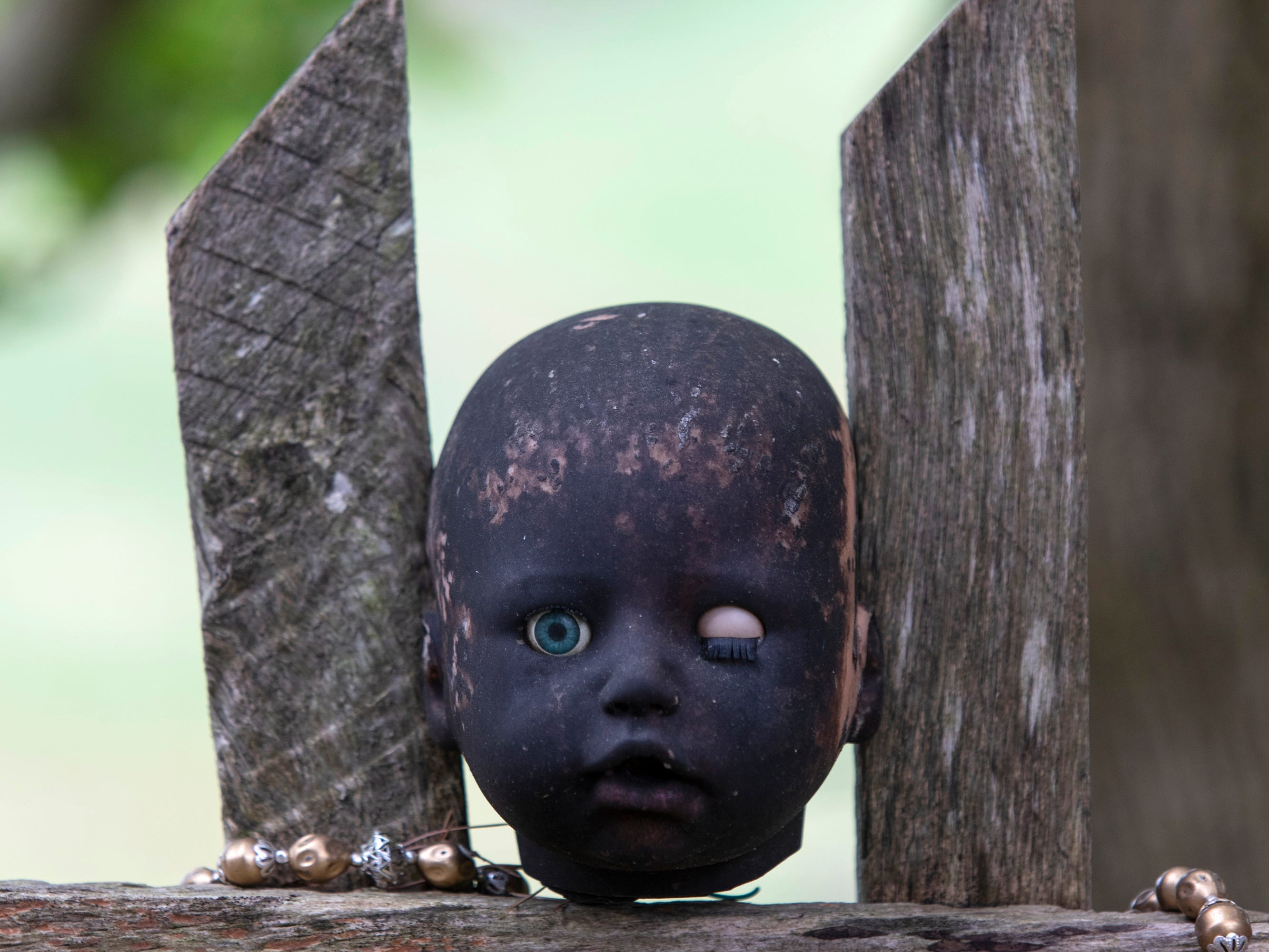 The head of baby doll resides between two pickets of a fence at the Home for Wayward Babydolls. April 19, 2019