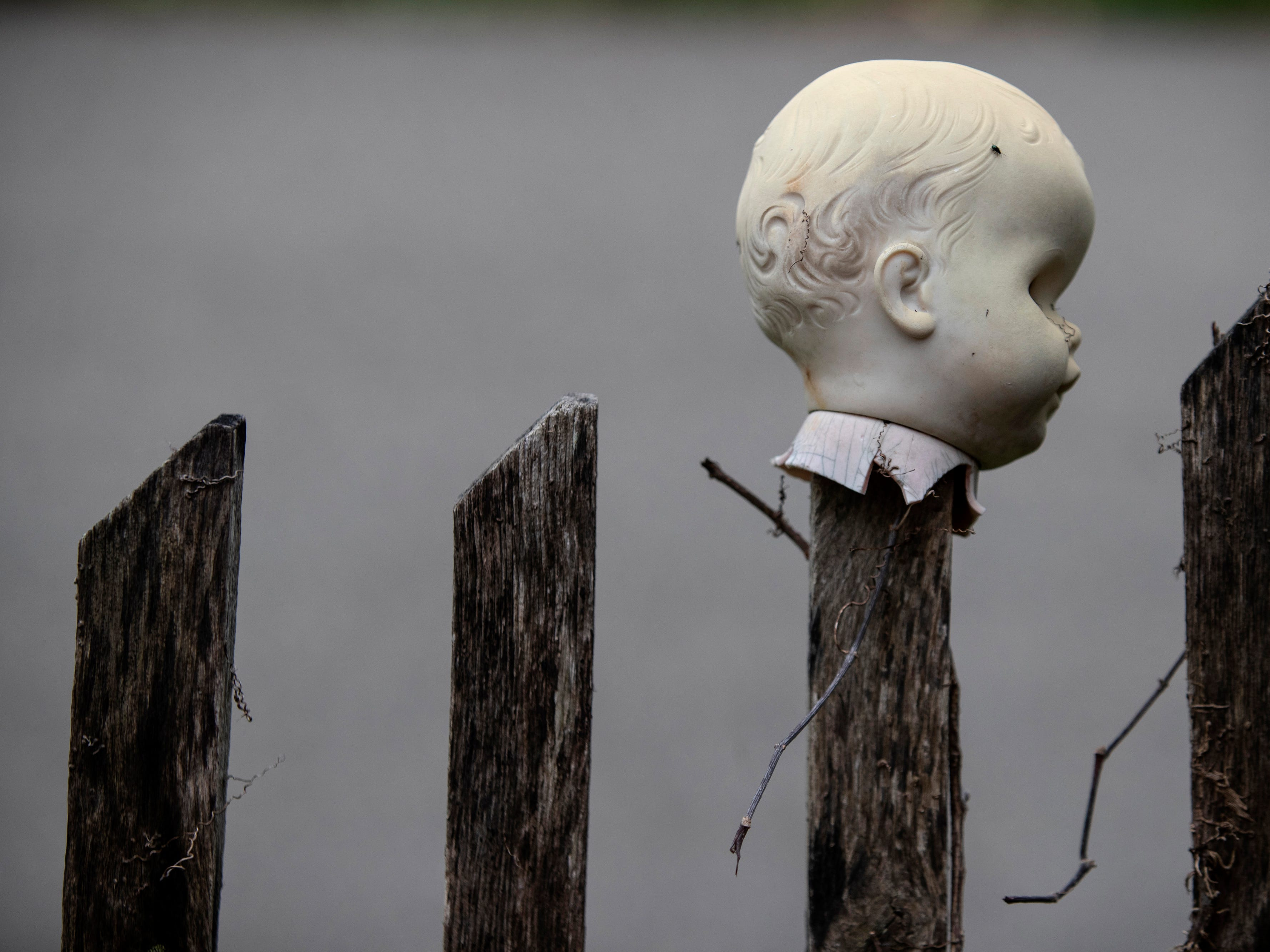 The head of a baby doll, impaled on a picket fence at the Home for Wayward Babydolls. April 19, 2019