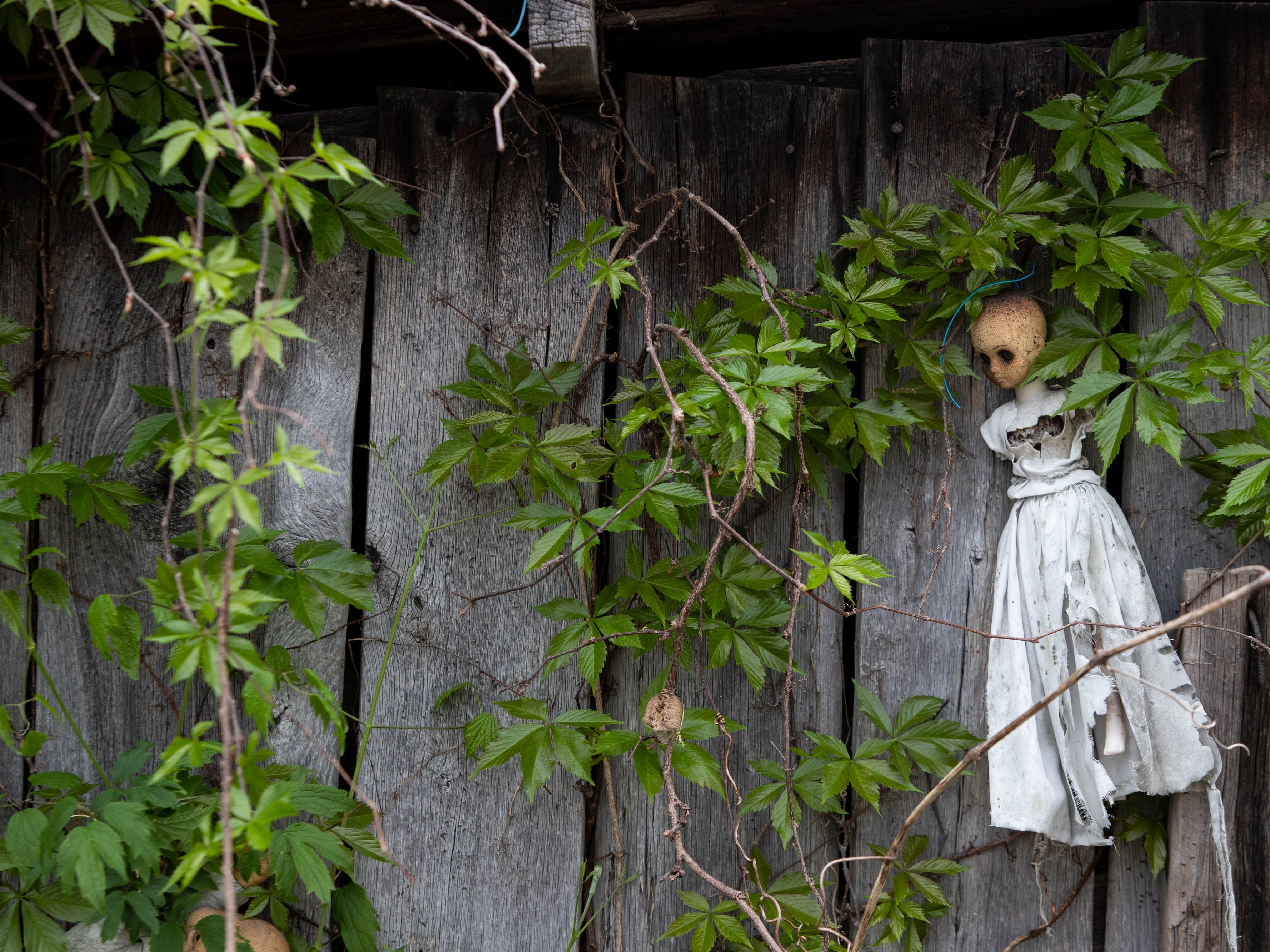 A small doll in a gown decays on the side of a building among the vines at the Home for Wayward Babydolls. April 19, 2019