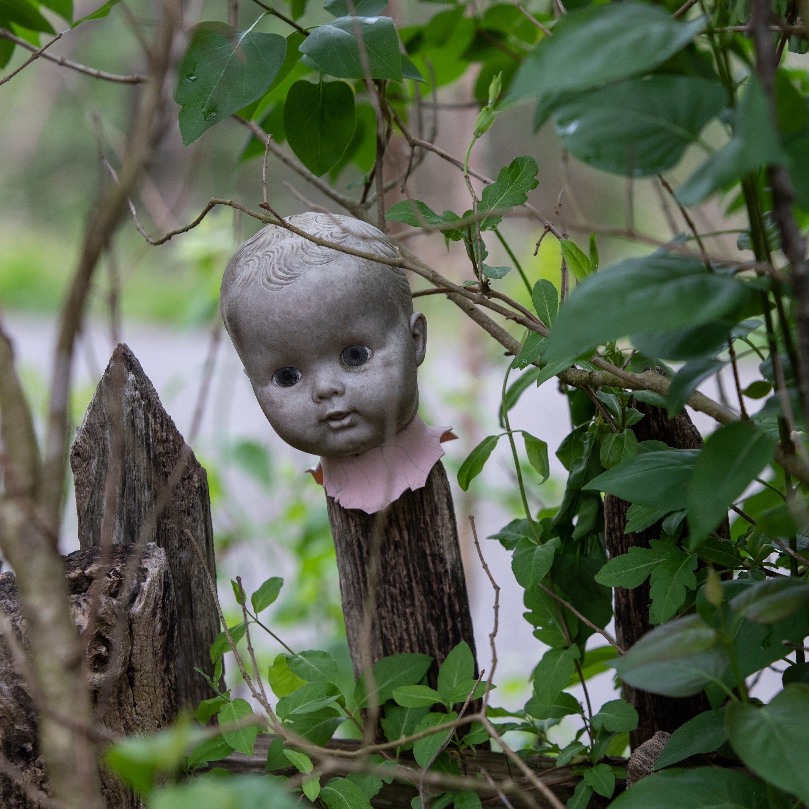 Welcome to the Home for Wayward Babydolls, a creepy resting place for discarded toys
