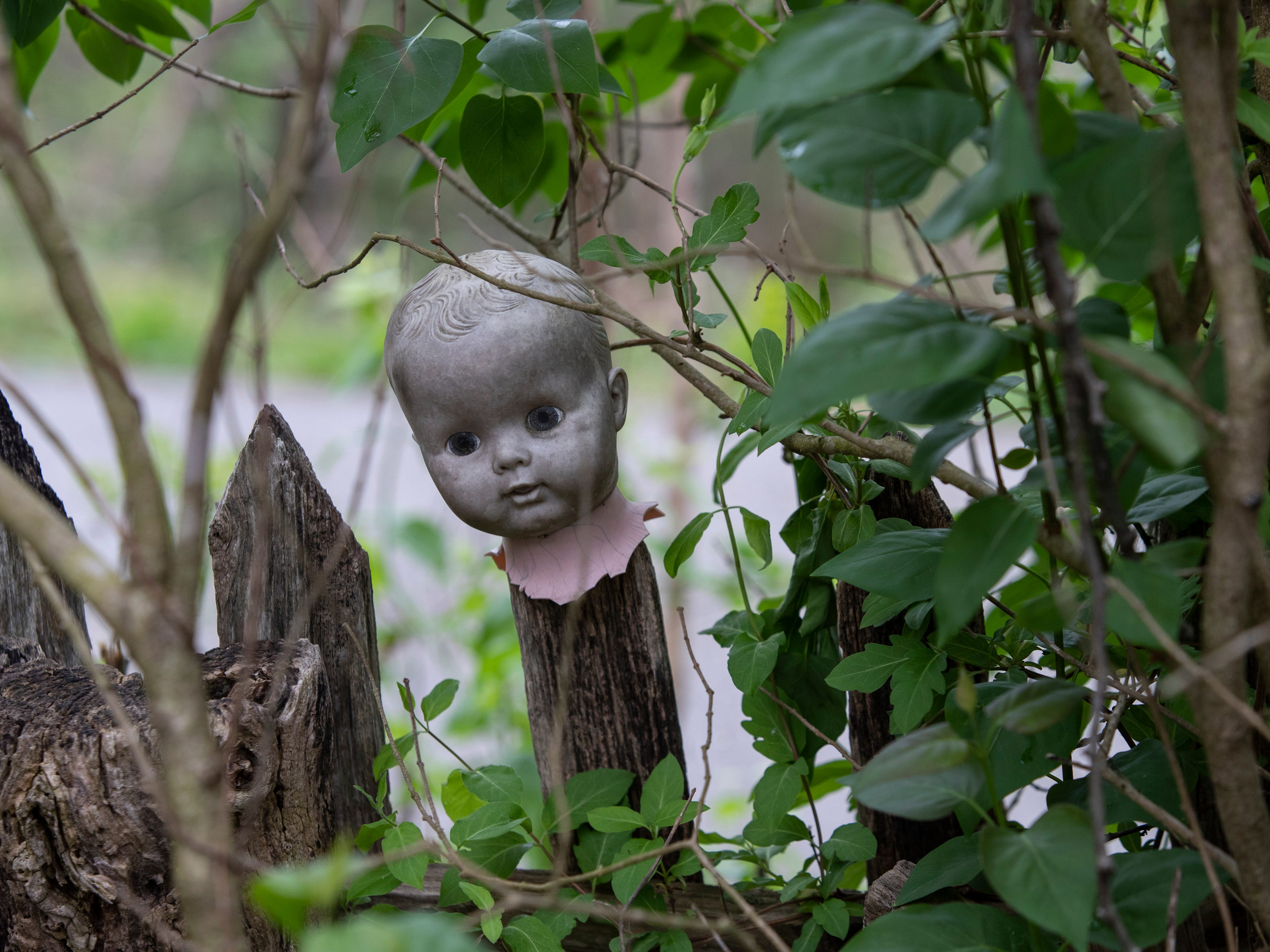A doll's head is attached to a picket fence at the Home for Wayward Babydolls. April 19, 2019