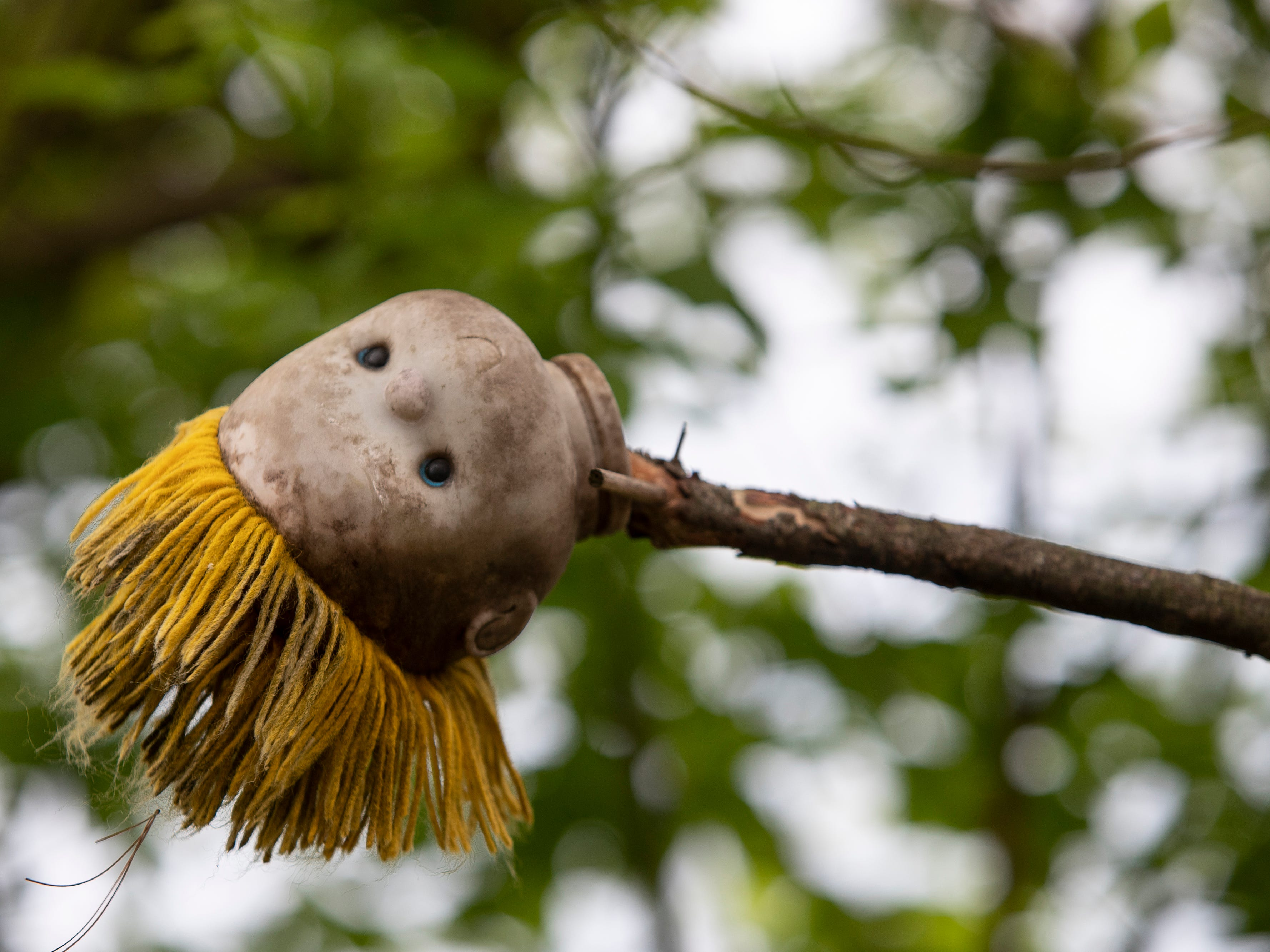 The head of a doll rests at the end of a tree branch at the Home for Wayward Babydolls. April 19, 2019