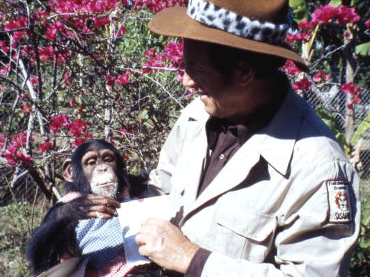 """Animal trainer """"Jungle Larry"""" Tetzlaff  holds a chimpanzee at Jungle Larry's African Safari at the Caribbean Gardens in 1979. Renamed the Naples Zoo, it is celebrating its 50th year as a zoo and 100th year as a botanical garden."""