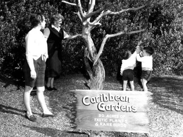 Young children observe the rare birds at Caribbean Gardens in 1960. The Naples Zoo is celebrating its 50th year as a zoo and 100th year as a botanical garden.