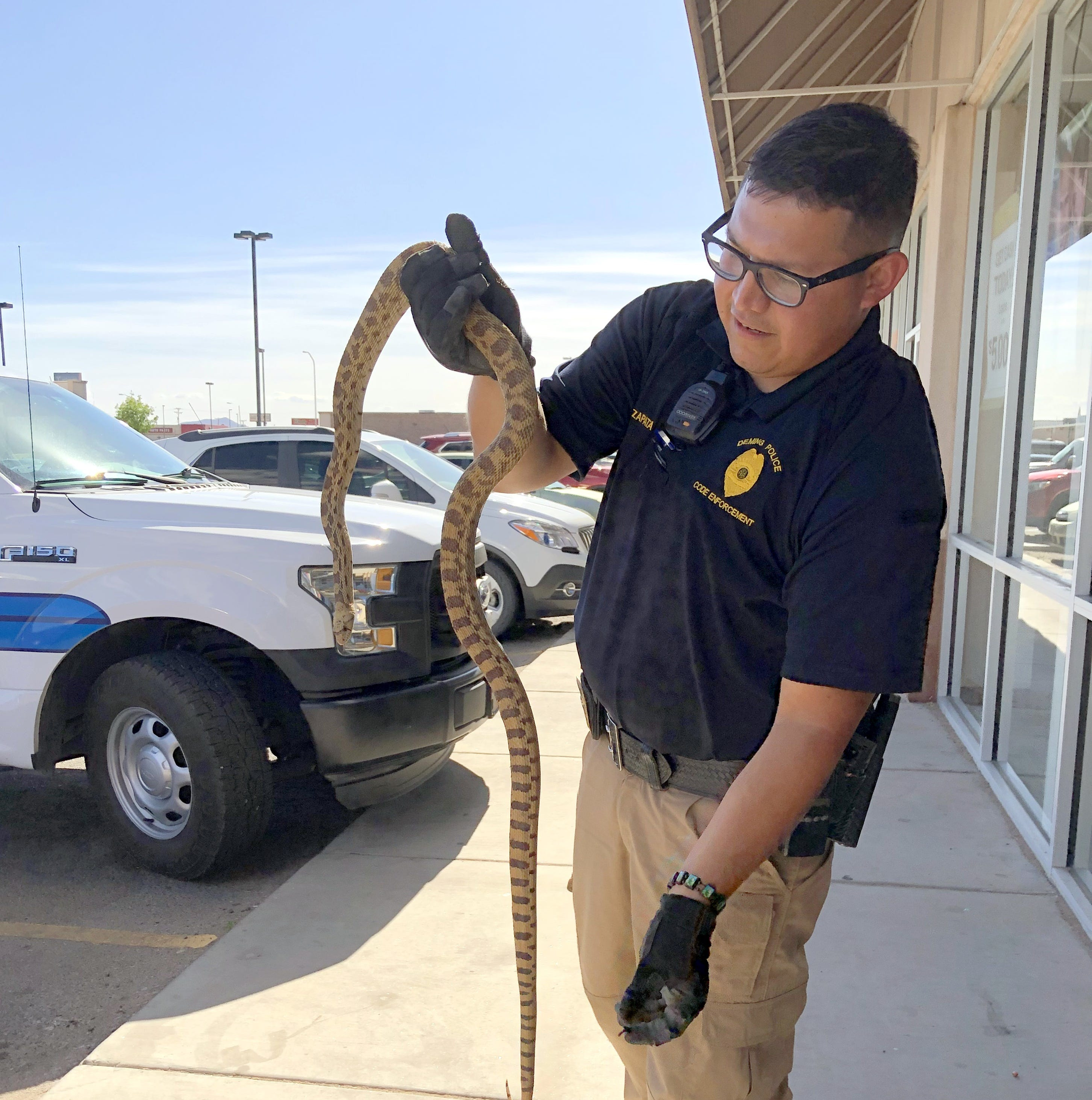 Deming Animal Control Officer Francisco Zapata rescues snake at local business