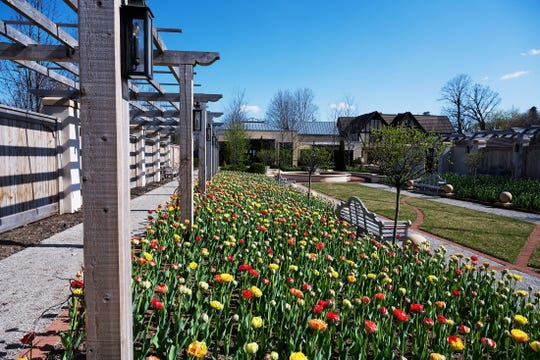 Tulips have bloomed at the Paine Art Center and Gardens.