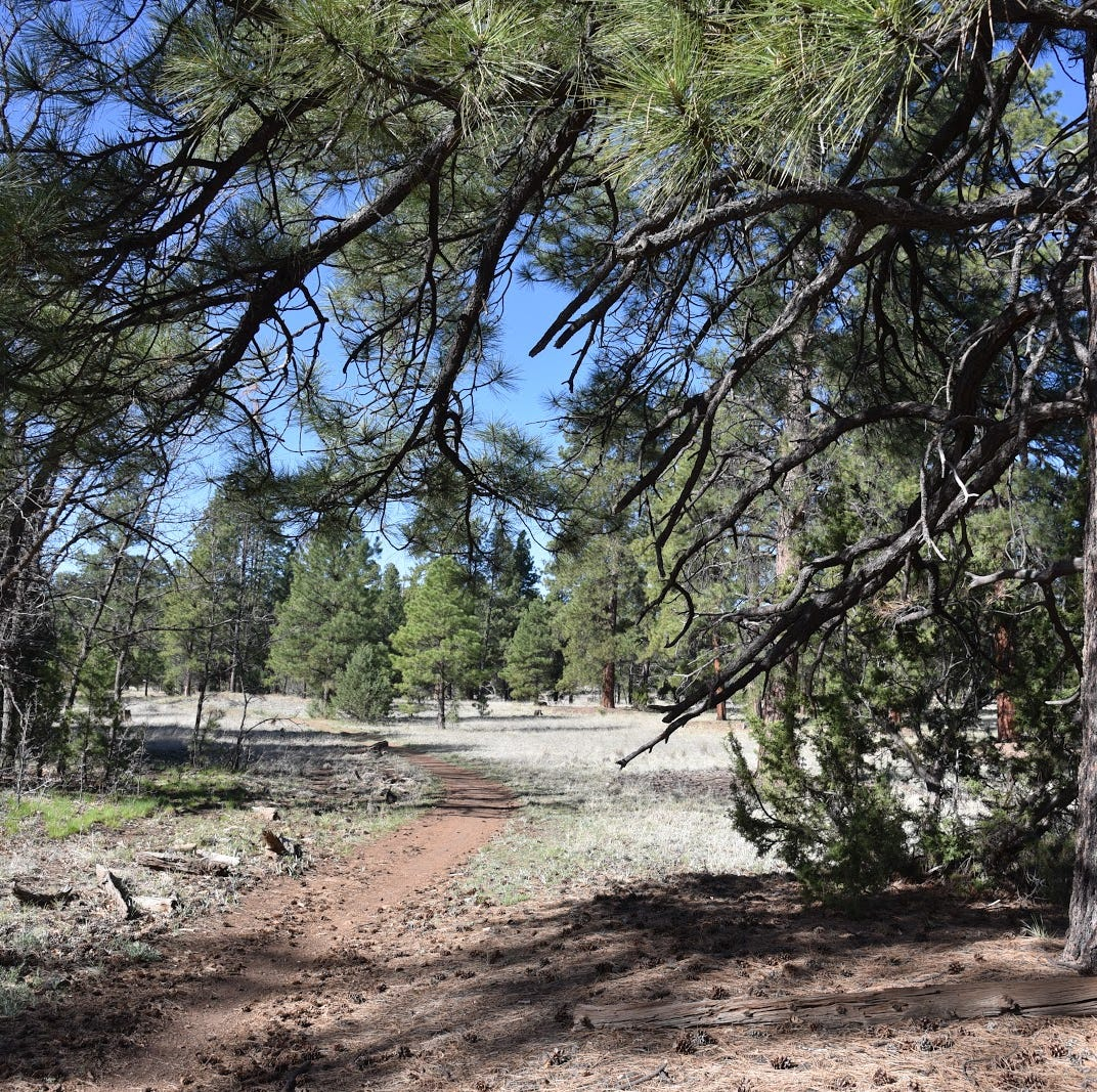 Tailor the length of this not-too-hilly Flagstaff hike to your liking