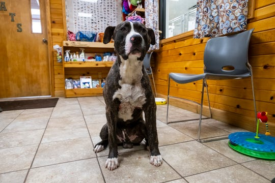 Blitz, a young mixed-breed dog, was found with multiple injuries in a backyard along Bryce Road in Kenockee Township Wednesday night. St. Clair County Animal Control is sending him to have his injuries treated, and is looking to locate his owner.