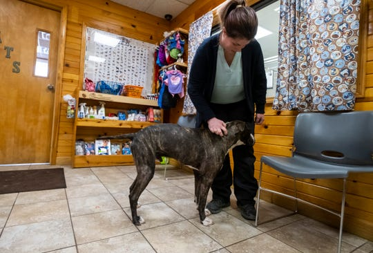 St. Clair County Animal Control Director Erika Strowman stands with Blitz Thursday, May 9, 2019 inside animal control's adoption center. Blitz, a young mixed-breed dog, was found in rough shape in a backyard along Bryce Road in Kenockee Township Wednesday night.