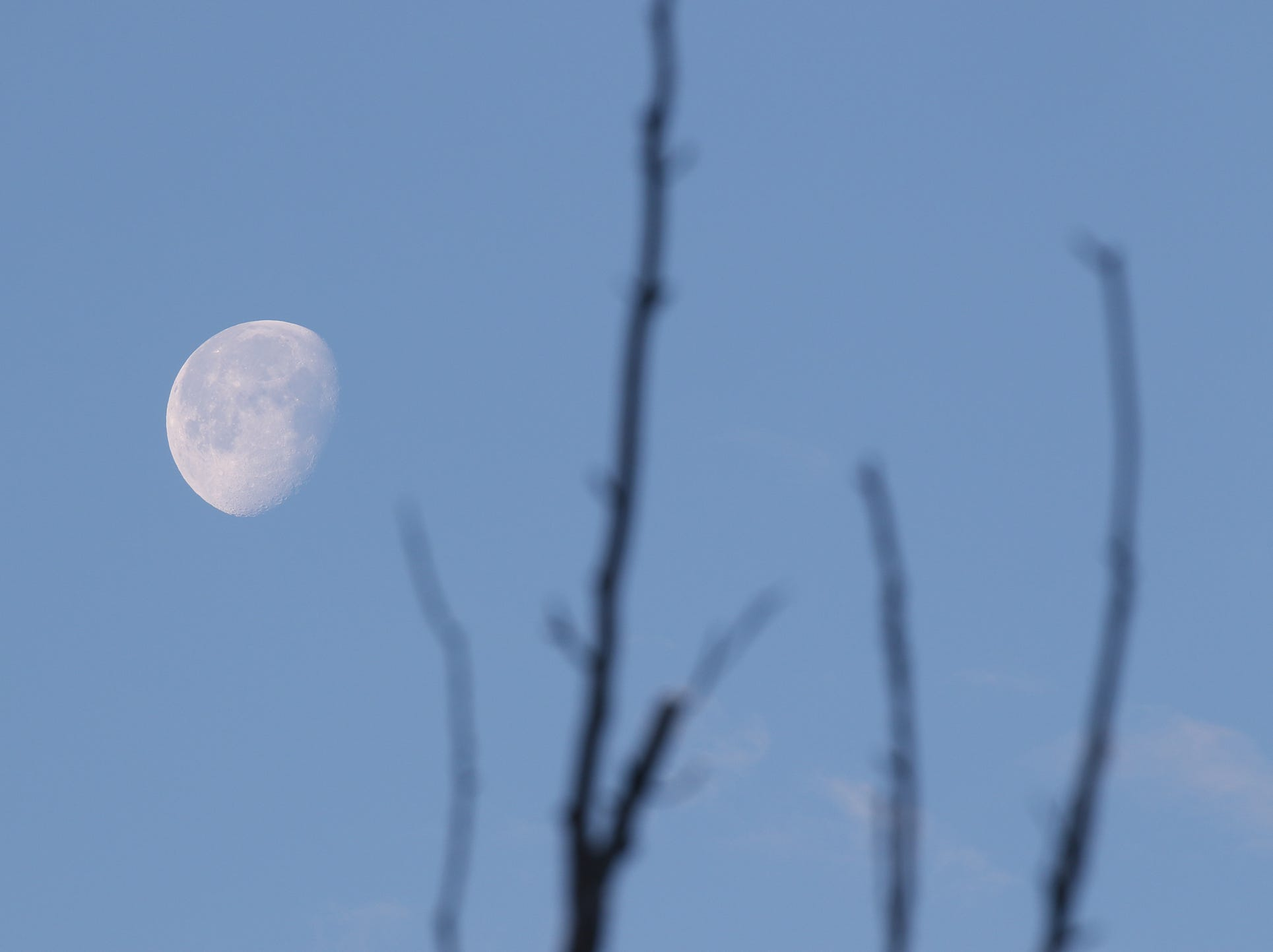 THE PHOTO:  A three-quarter morning moon shines brightly in the sky.  FROM TINA:  I was taking an early morning walk to see if I could find a fox with her pups and instead of finding them I found this beautiful morning moon.