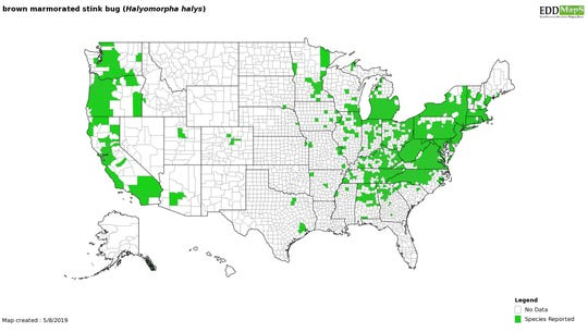 Distribution of brown marmorated stink bugs in the United States