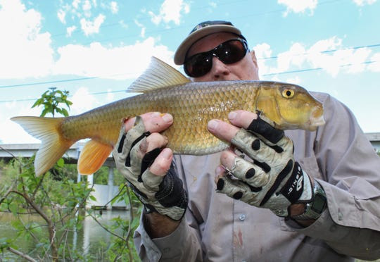 Joe Richmond with a good-sized yellow sucker. Now 76, he started grabbing suckers from Ozarks creeks when he was only 4 years old.
