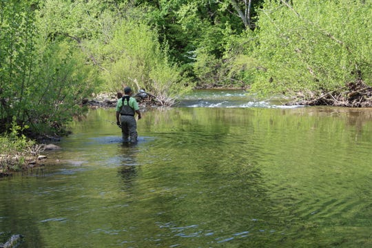 Angler Tim Baker wades Bull Creek to drive a school of  suckers toward fellow sucker anglers.