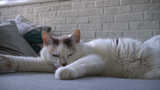 Tallahassee Film Society is showing CatVideoFest 2019 this weekend