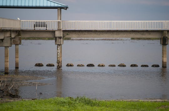Reef balls can be seen protruding from the shallow water under the Lock 7/Jaycee Park Fishing & Observation Pier on Tuesday, May 7, 2019, in Okeechobee County. County commissioners from Martin, Palm Beach, Glades, Hendry and Okeechobee were attending a joint commission meeting later at nearby Okeechobee High School, where stakeholders voiced their concerns about the low water level, following statements from the Army Corps of Engineers and Rep. Brian Mast's office.
