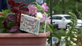 The annual Wilmington Flower Market, now in its 99th year, began Thursday at Rockford Park and runs through Saturday.  5/9/19