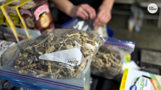 "Denver is the first U.S. city to decriminalize ""magic mushrooms."""