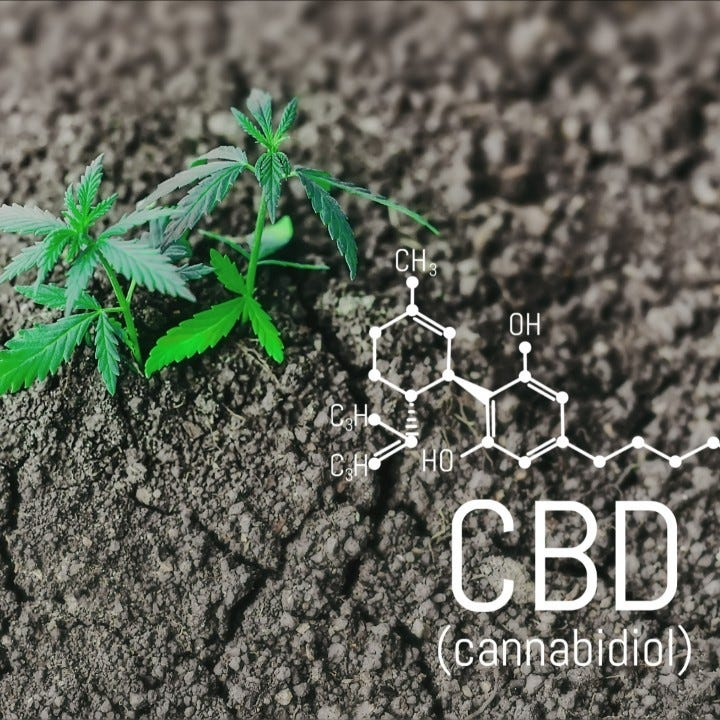 What to know when you encounter CBD oil