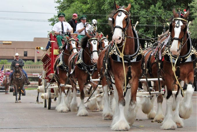 The beloved Clydesdales clop north on Pine Street to start Thursday evening's Western Heritage Classic parade. A street dance on the star followed ... after streets were cleared of souvenirs left by the many horses in the parade. May 9, 2019.