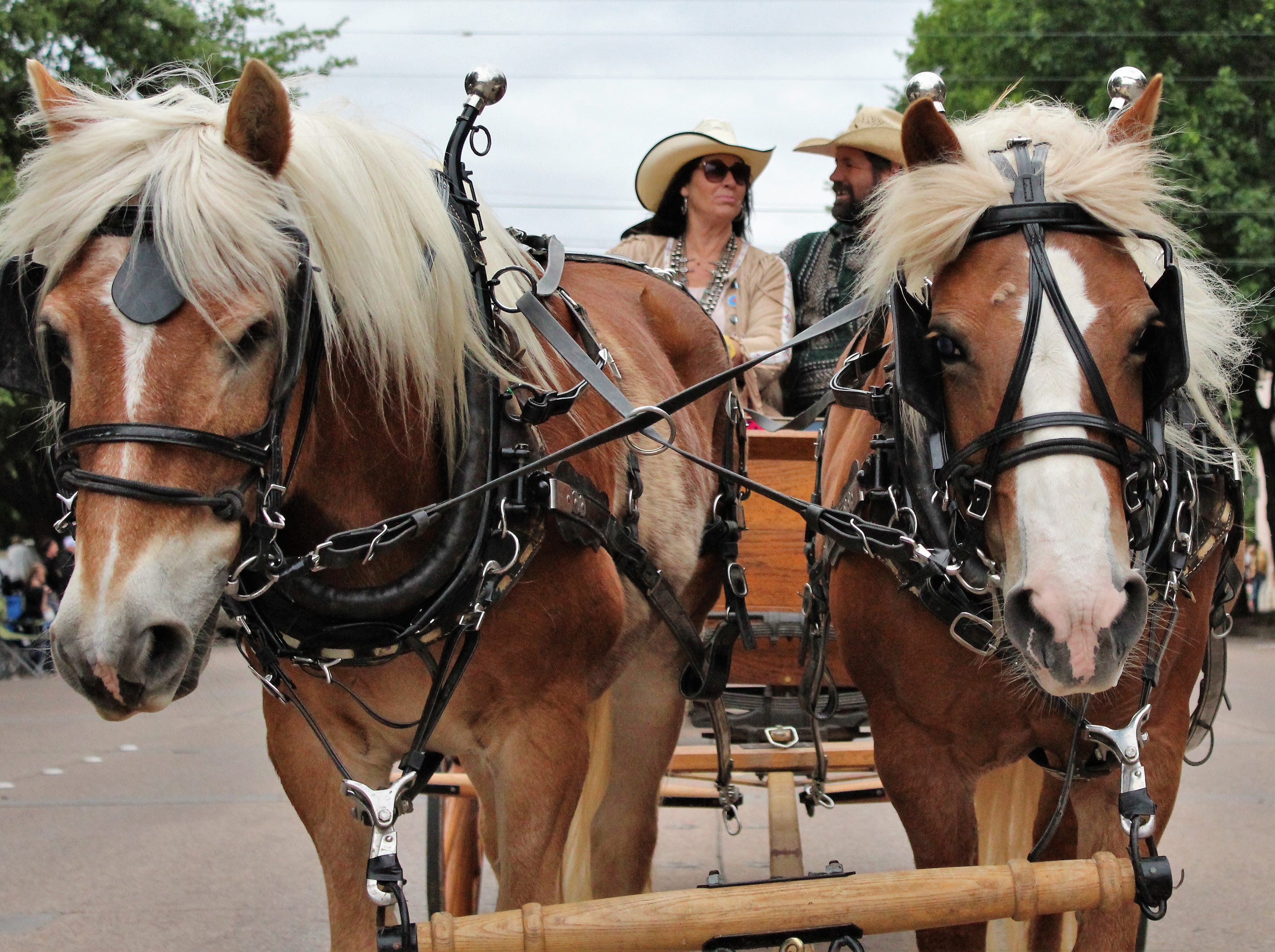 These horses have the best hair, seen during Thursday evening's Western Heritage Classic parade through downtown Abilene. May 9, 2019.