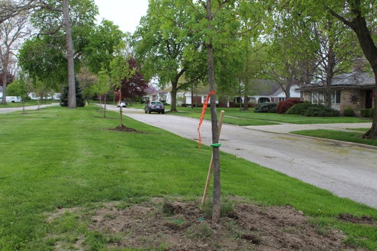 The city and residents have teamed up to plant new trees along McPherson Boulevard in Fremont.