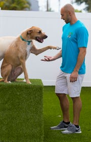 Brandon Perau interacts with Sheldon, a hound-terrier mix, Thursday afternoon, May 9, 2019. Tiki Tails Dog Resort opened recently in Cape Coral and offers customers boarding, daycare and grooming services.