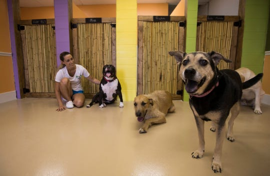 Several of the boarding rooms are visible at Tiki Tails Dog Resort in Cape Coral. The newly opened facility also offers customers daycare and grooming services.