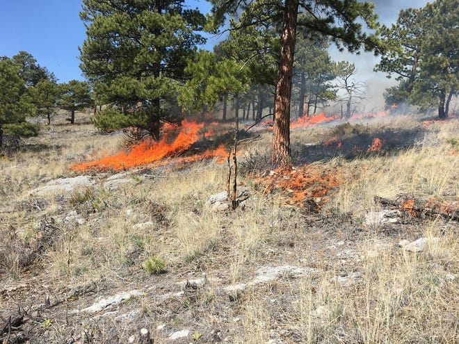 This prescribed burn, which took place in late April, was north of York in the Favorite Gulch area. Saturday's prescribed burn will be conducted adjacent to this location.