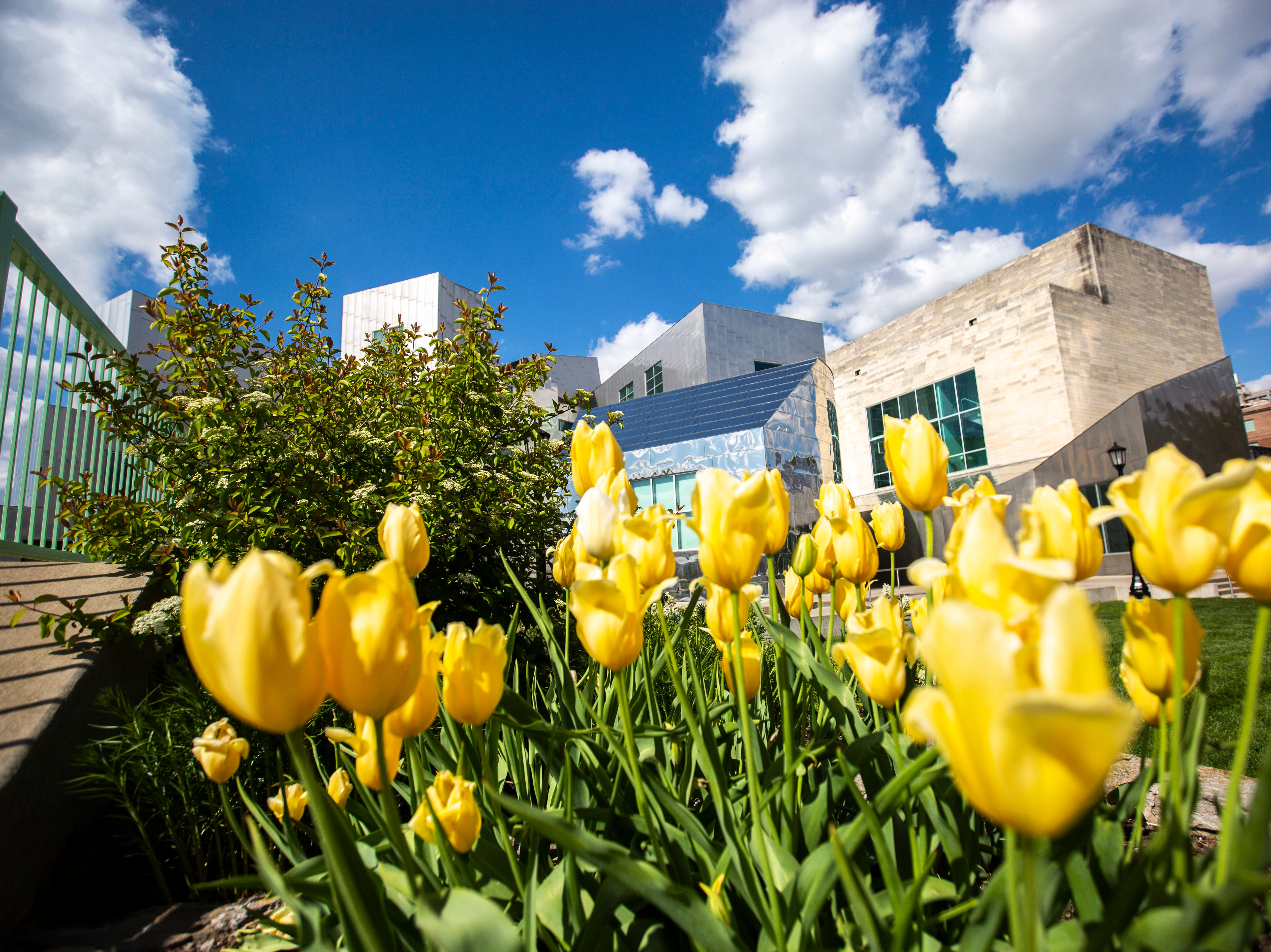 Yellow roses are pictured in the foreground in front of the IATL Iowa Advanced Technology Laboratories during the last day of finals week, Friday, May 10, 2019, on the University of Iowa campus in Iowa City, Iowa.