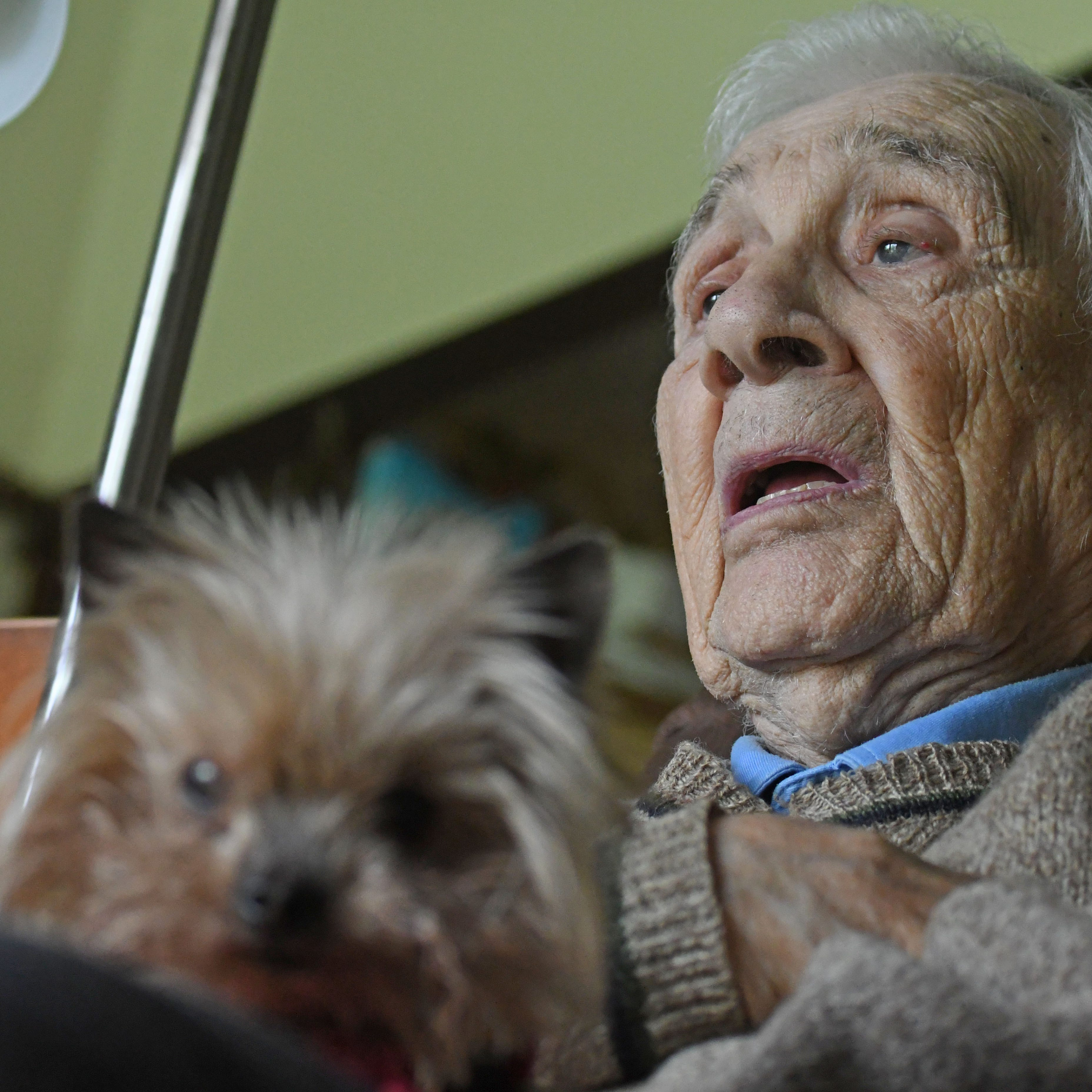 New book details WWII adventures of Yorkie and her owner