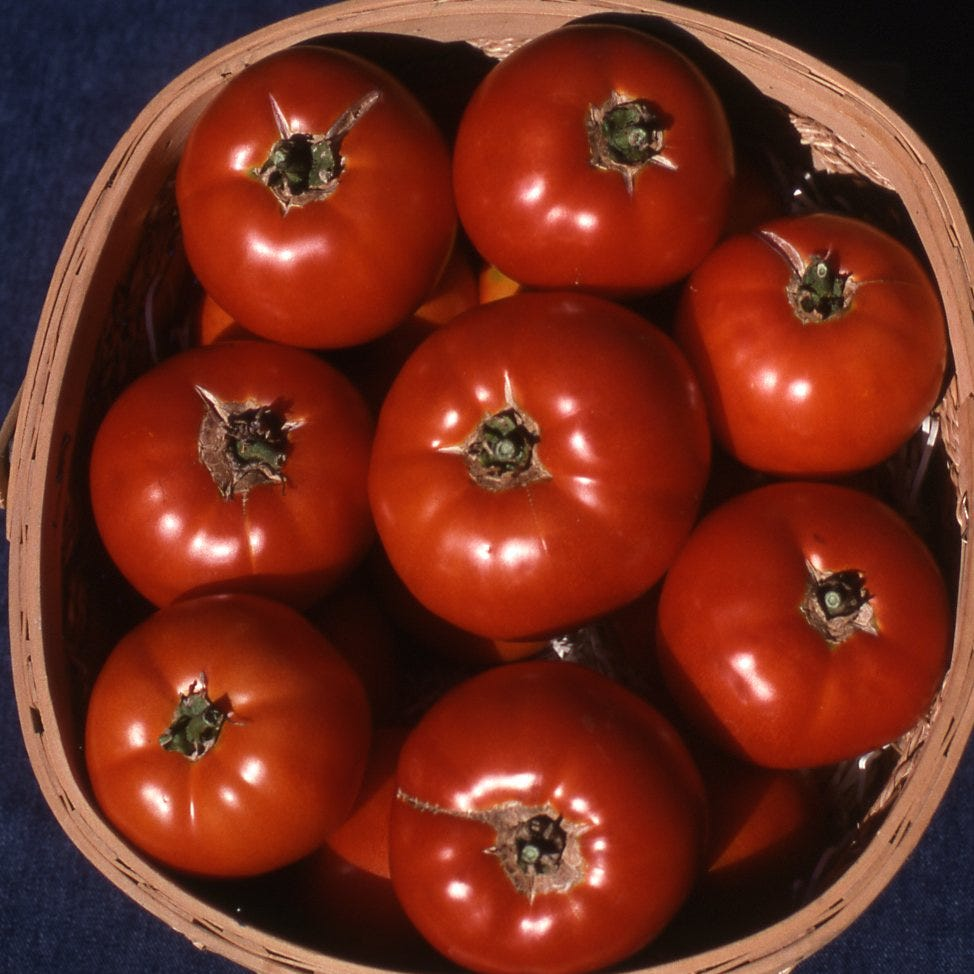 In The Garden | What to know about tomatoes